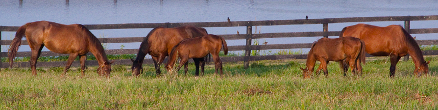 Whispering Oaks Farm